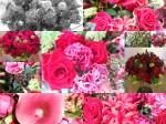 BCC Flowers